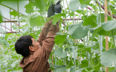 A man with no growing experience successfully grows vegetables