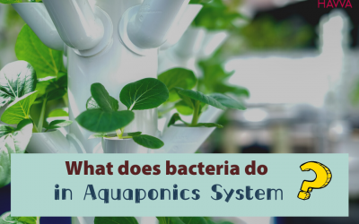 The importance of nitrifying bacteria to your aquaponics system