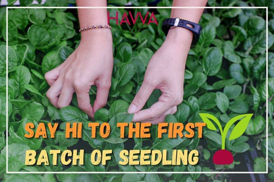 HAVVA collaborate with Gamuda Land to build the first urban farm in  Quayside Mall at Selangor – Part 3