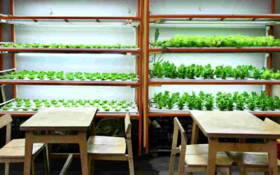 Why Indoor Urban Farming Is Not Suitable in Malaysia