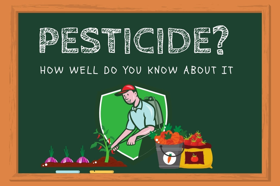 Top 3 natural and organic pesticide that you don't know can be  used at home gardening