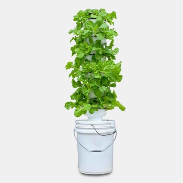 home planting hydroponic