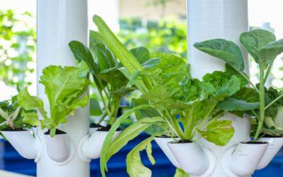 减少食物浪费,为我们的环境尽一份力