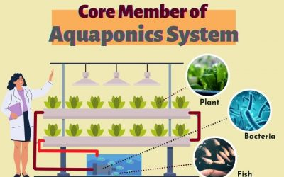 What's Aquaponics and how does it work?