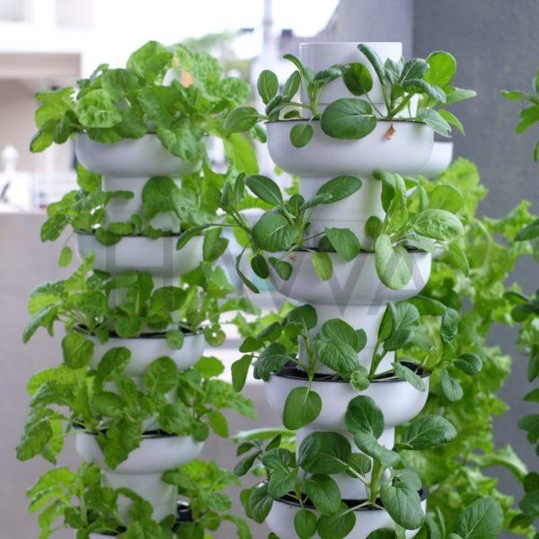 urban hydroponic garden